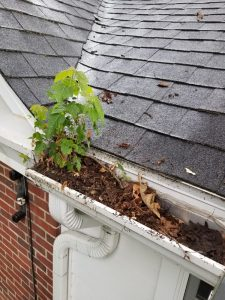 Gutter Cleaning Okemos